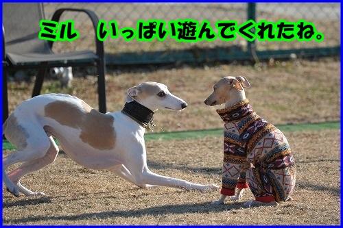 DSC_2561_2014011422214953e.jpg