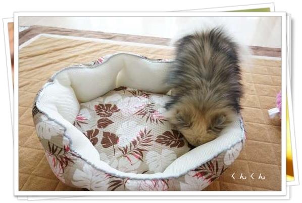 夏用ベッド2