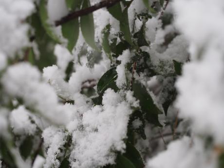 ムツトゲイセキグモのいる木2