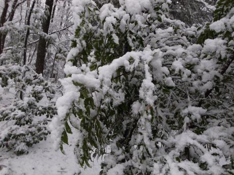 ムツトゲイセキグモのいる木