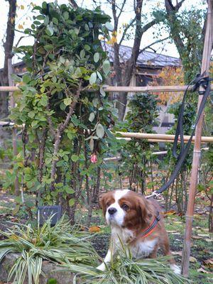 004花壇冬囲い