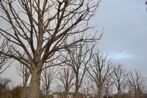 010裸の木々