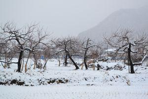 008雪景色