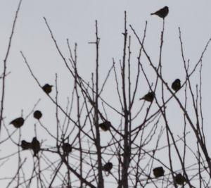 010小鳥