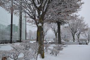 001北公園雪景色