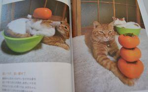 012のせ猫