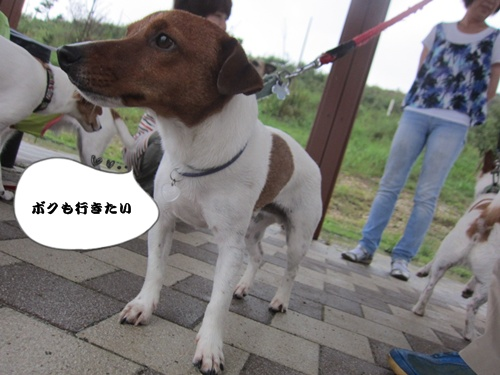 IMG_010946.jpg