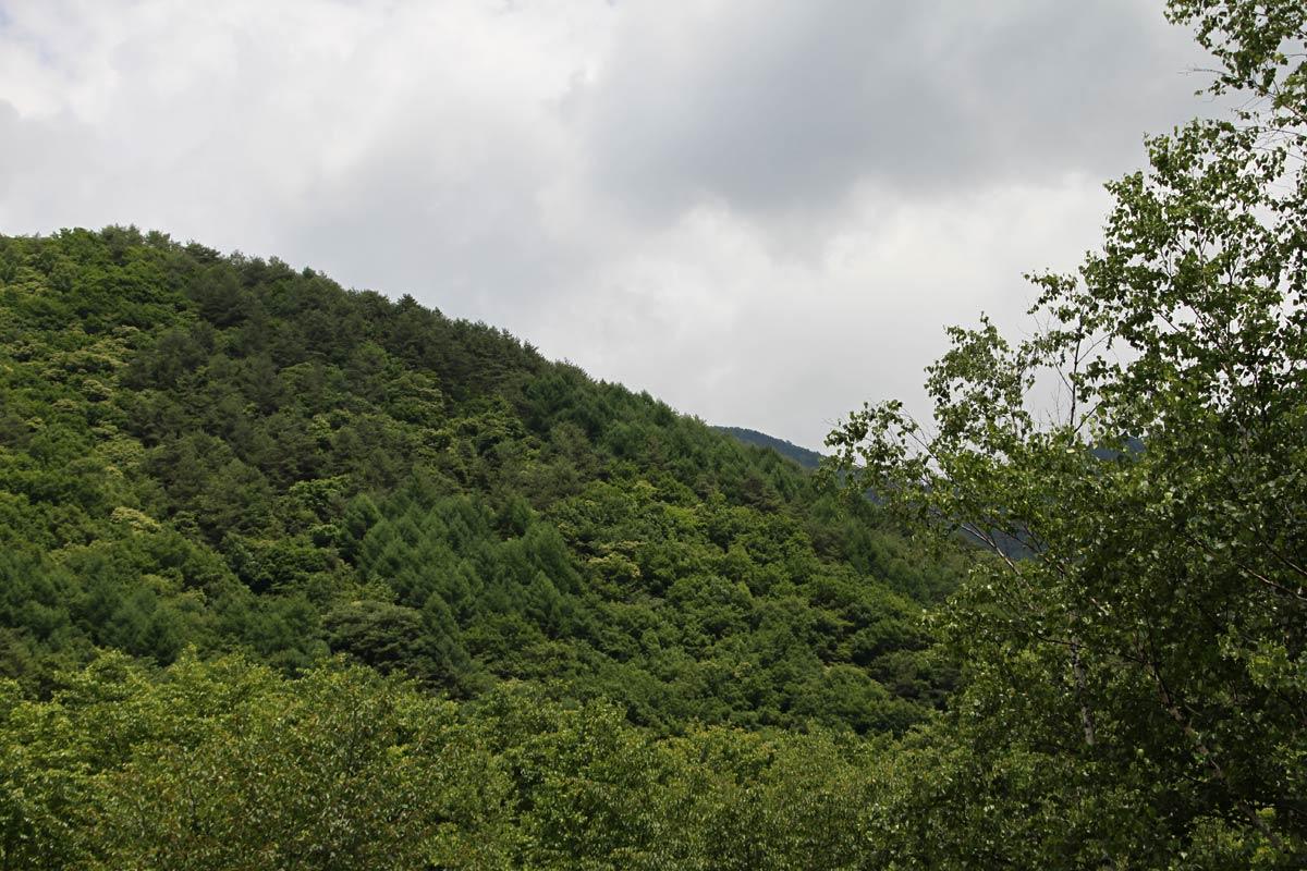 木曽駒高原