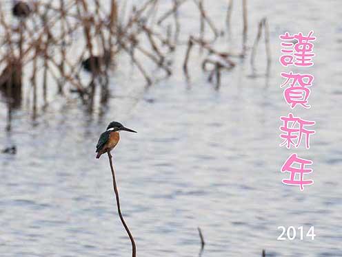 カワセミ冬02