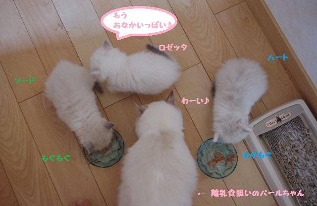 お食事IMGP2143