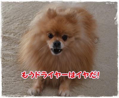 DSC_1350_20140108212607b78.jpg