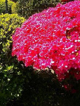 PhotoHenshu_20130424191007.jpg
