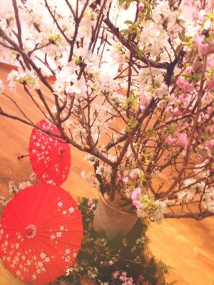 sakura+matsuri2_convert_20130411045407.jpg