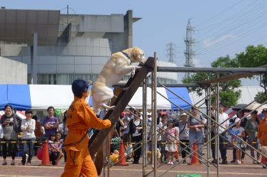 動物愛護2013-4