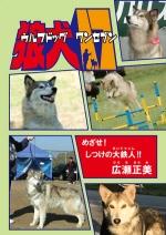 wolfdog17.jpg