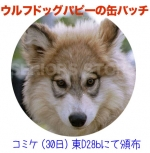 wolfdogcanbachi.jpg