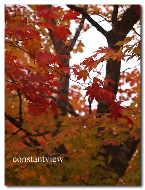 紅葉#1  2014 10/18 UP DATE !