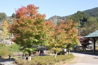 shuku-IMG_4605.jpg