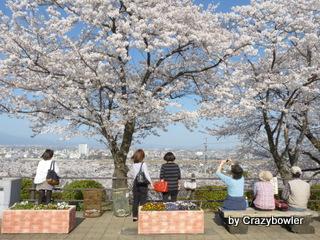 高崎観音山の桜 2013/4