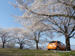 高崎観音山の桜