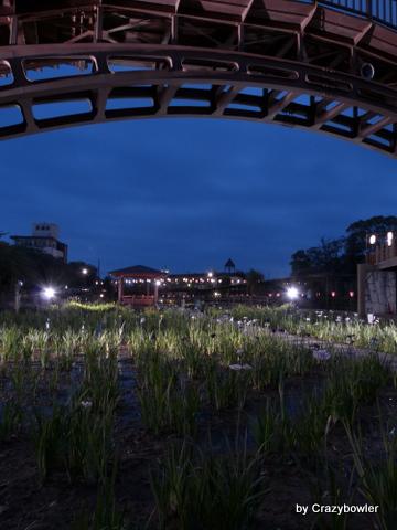 潮来市前川あやめ園(茨城県)