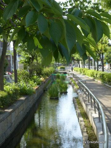 見沼代親水公園 2013年6月