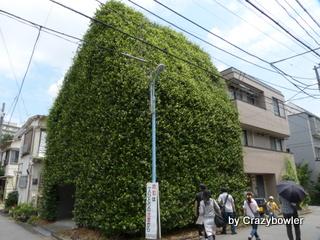 百人町 緑の家