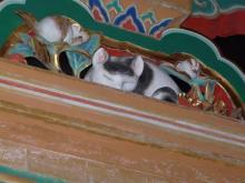 眠り猫眠り