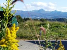 コスモスと赤城山