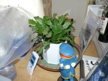生涯学習!by Crazybowler-観葉植物