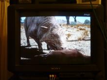 生涯学習!by Crazybowler-恐竜絶滅 ほ乳類の戦い