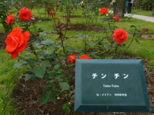 生涯学習!by Crazybowler-秋のばら園まつり 敷島公園ばら園(群馬)