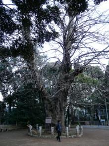 生涯学習!by Crazybowler-赤坂氷川神社