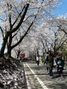 生涯学習!by Crazybowler-赤城南面千本桜