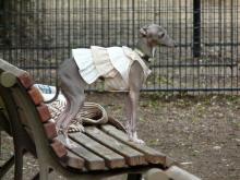 生涯学習!by Crazybowler-代々木公園 ドッグラン