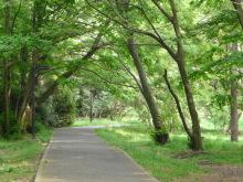 生涯学習!by Crazybowler-代々木公園 サイクリング