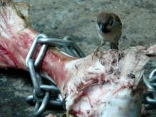 $生涯学習!by Crazybowler-上野動物園 トラの餌