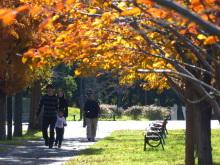 生涯学習!by Crazybowler-舎人公園の紅葉 2011