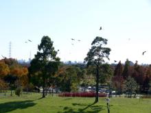 生涯学習!by Crazybowler-舎人公園 朝日の広場
