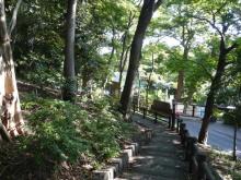 生涯学習!by Crazybowler-上野の山の自然 シイーブタノキ林