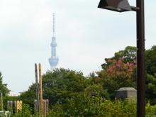 生涯学習!by Crazybowler-谷中霊園