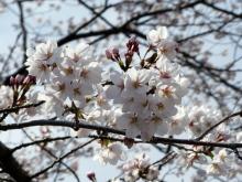 生涯学習!by Crazybowler-2012春 見沼代親水公園