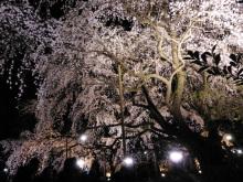 $生涯学習!by Crazybowler-六義園 しだれ桜ライトアップ