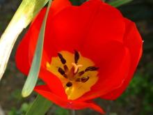 生涯学習!by Crazybowler-春の花 クローズアップレンズ