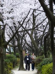 生涯学習!by Crazybowler-2012春 武蔵野の道