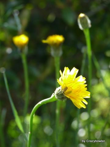 生涯学習!by Crazybowler-上関(山口県)の植物