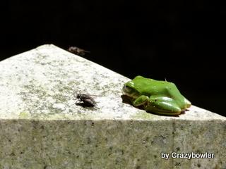 $生涯学習!by Crazybowler-東行庵 墓石のかえるとはえ