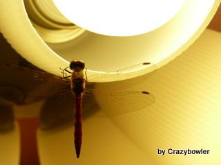 生涯学習!by Crazybowler-トンボ