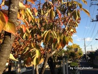 生涯学習!by Crazybowler-紅葉2012/11初旬 足立区北西部