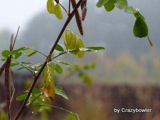 生涯学習!by Crazybowler-みなかみ秋2012